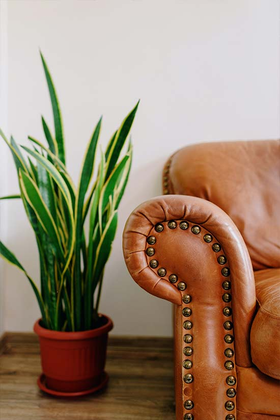 leather furniture repair and colour in Essex and London